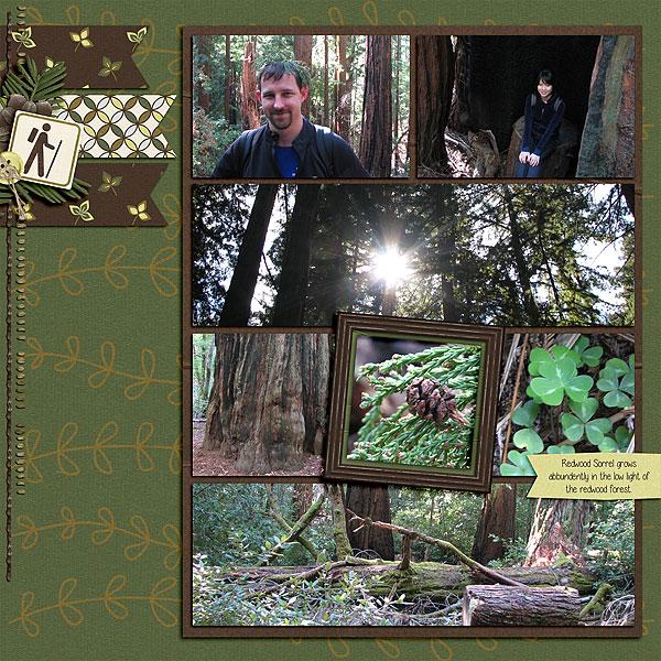 2014-07-24_LO_Big-Basin-Redwoods-State-Park-2