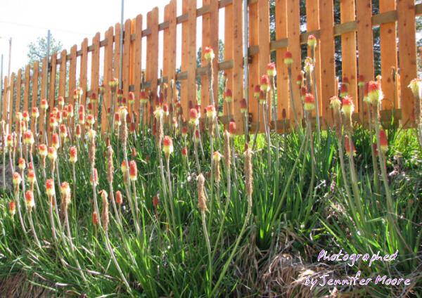 Flowers (seen near the cabin)